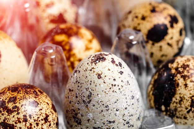 Jajka przepiórcze świeże organiczne w plastikowej tacy.