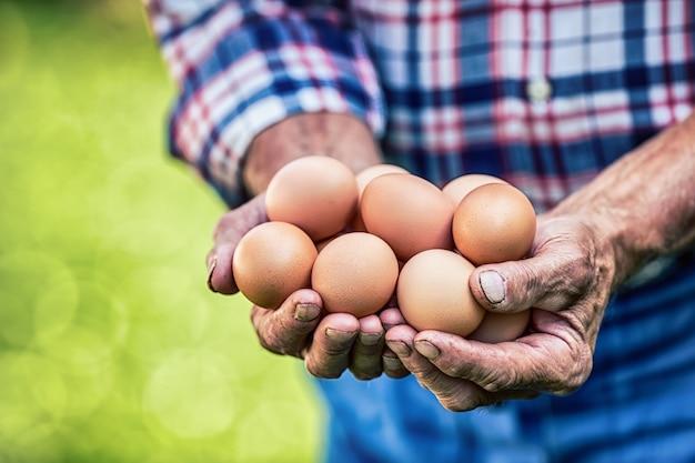 Jajka w rękach. zamknij się umiejętny stary rolnik posiadający jaja kurze.