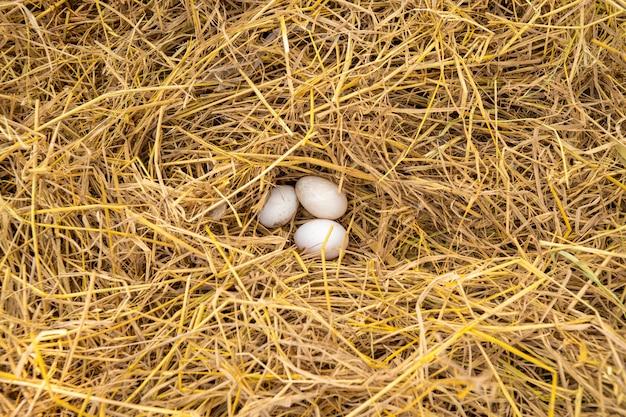 Jajko kaczki jest na słomie.
