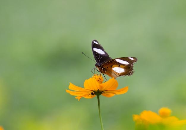Jajko motyl na kwiatku w jego naturalnym środowisku w miękkiej zieleni