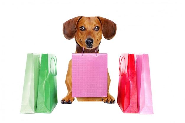 Jamnik pies trzyma papierową torbę