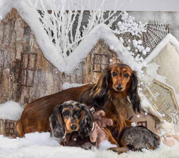 Jamniki przed świąteczną scenerią