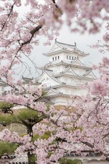 Japonia himeji kasztel, biały czapla kasztel w pięknym sakura czereśniowego okwitnięcia sezonie
