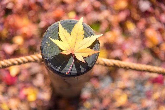 Japoński liść klonowy na drewno deseniu backgroud w jesień sezonie przy kyoto, japonia
