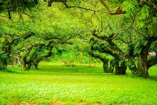 Japoński ogród morelowy. nieostrość.