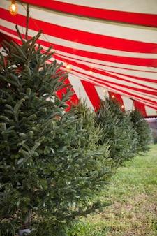 Jarmark bożonarodzeniowy wiecznie zielonych drzew
