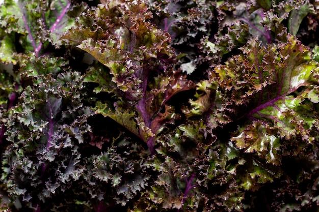 Jarmuż pozostawia świeżą zieloną, kręconą powierzchnię żywności
