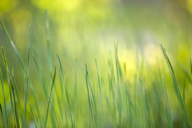 Jaskrawa zielona trawa, cienkie ostrza r na zamazanym zielonym bokeh trawiastym tle na pogodnej wiośnie lub letnim dniu. piękno koncepcji środowiska naturalnego.
