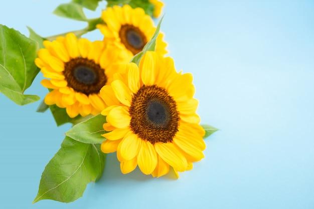 Jaskrawi mali słońce kwiaty odizolowywający nad błękitnym lekkiego koloru tłem