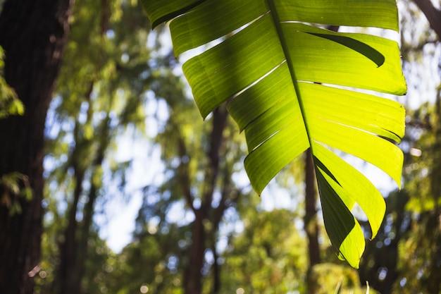 Jaskrawy roślina liść w ogródzie