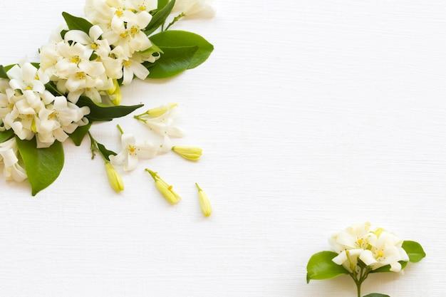 Jaśminowe kwiaty układania w stylu pocztówki