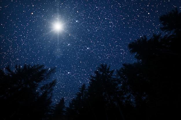 Jasna gwiazda na niebie w nocy w lesie
