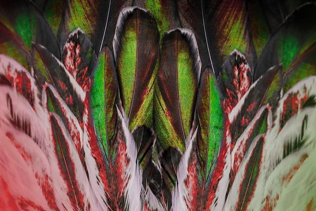 Jasna kolorowa grupa piór jakiegoś ptaka