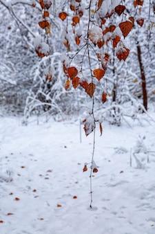 Jasne jesienne liście pod śniegiem. zmiana pór roku, pogody i klimatu.
