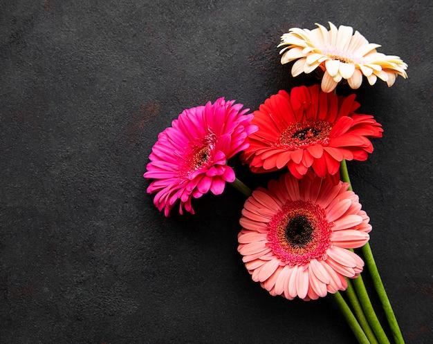 Jasne kwiaty herbera na czarnym tle
