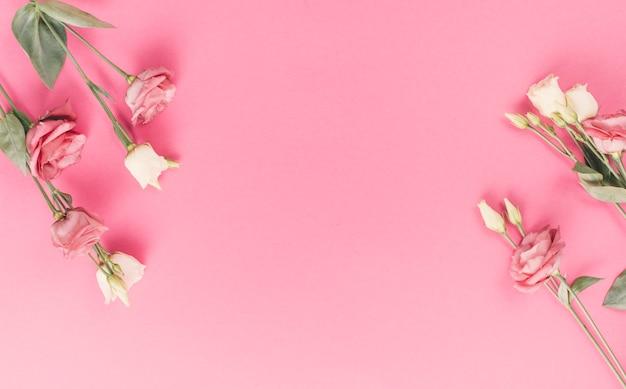 Jasne kwiaty róży na różowym tle