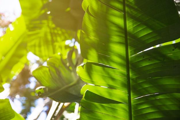 Jasne liście tropikalnej rośliny