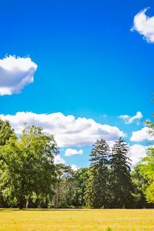 Jasne pole łąka drzewa sosny niebo chmury kopia przestrzeń