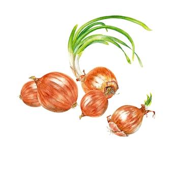 Jasne realistyczne główki czerwonej cebuli z młodymi zielonymi pędami
