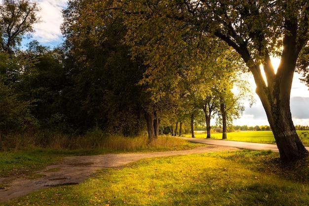 Jasne światło słoneczne wpadające przez liście drzewa pada na skraj wiejskiej drogi