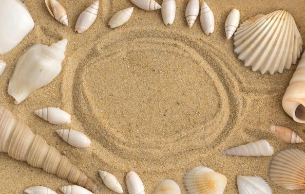 Jasne tło z różnych muszli i piasku koralowego