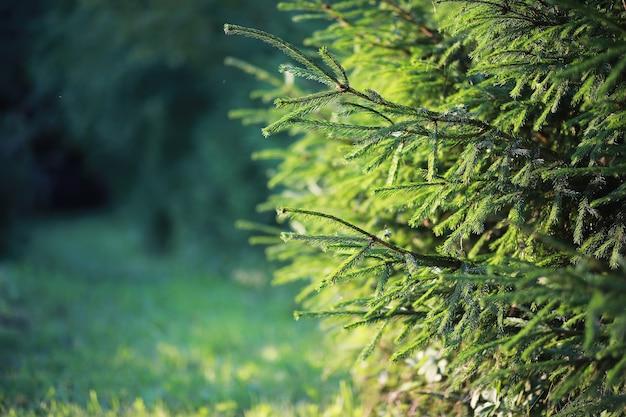 Jasne wiosenne zielenie o świcie w lesie. natura budzi się do życia wczesną wiosną.
