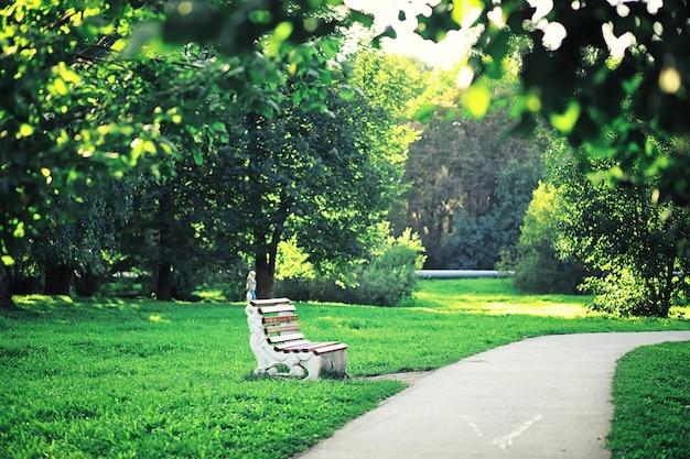Jasne wiosenne zielenie o świcie w lesie. przyroda budzi się do życia wczesną wiosną.