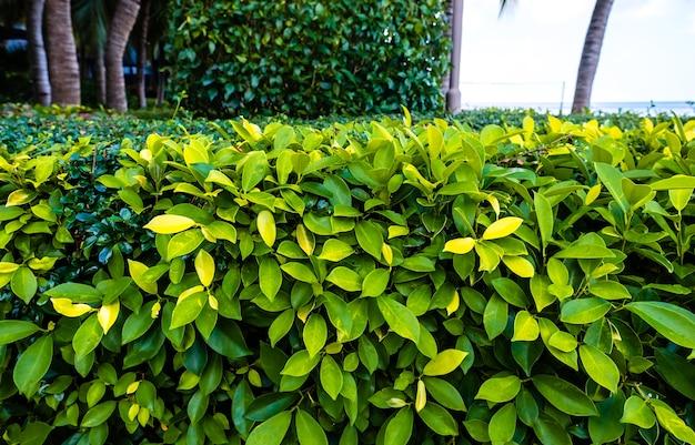 Jasne zielone liście roślin tropikalnych w ogrodzie w pobliżu morza w słoneczny letni dzień.