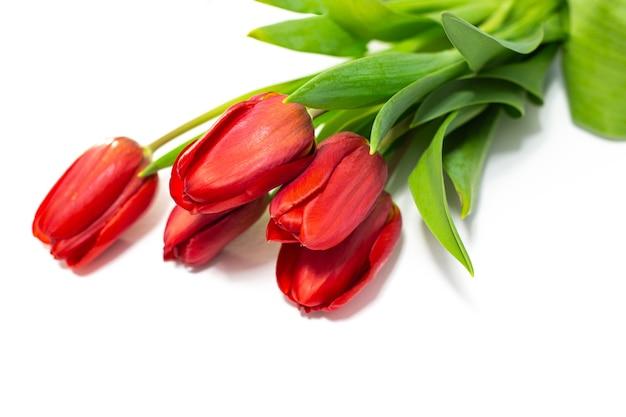 Jasnoczerwone tulipany leżą na białym tle. deklaracja miłości. piękne wiosenne kwiaty.