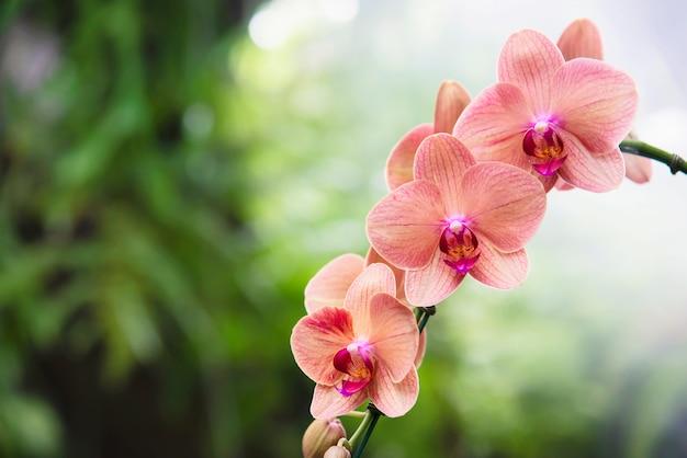 Jasnopomarańczowa orchidea z zielonym liściem, piękny kwiat natury
