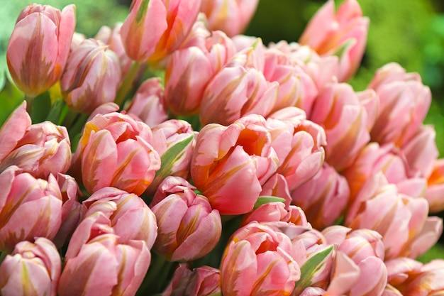Jasnoróżowe kwiaty rosnące w szklarni.