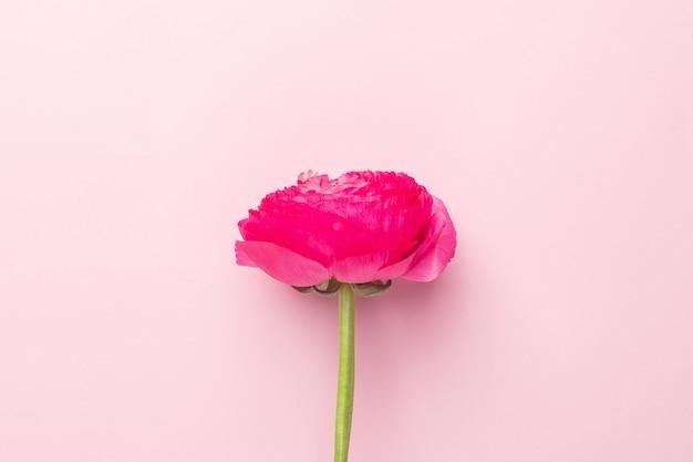 Jasnoróżowy kwiat