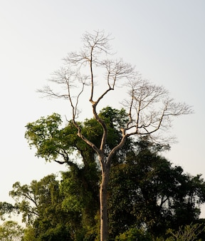 Jasnozielone liście na dużych drzewach