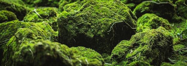 Jasnozielony porośnięty mech pokrywa szorstkie kamienie i podłogę w lesie.