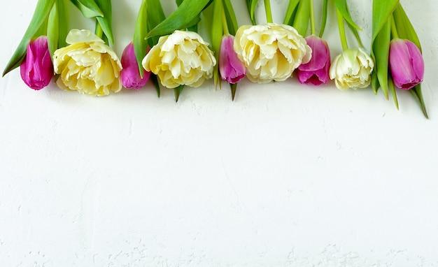 Jasnożółte i różowe tulipany frotte na lekkiej przestrzeni kopii