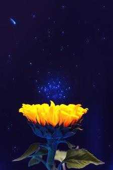 Jasnożółty słonecznik. na tle przestrzeni kosmicznej i gwiezdnego pyłu. skopiuj miejsce
