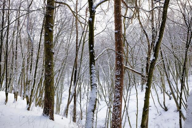 Jasny jasny dzień zimą, mroźna mroźna pogoda w parku lub lesie z drzewami
