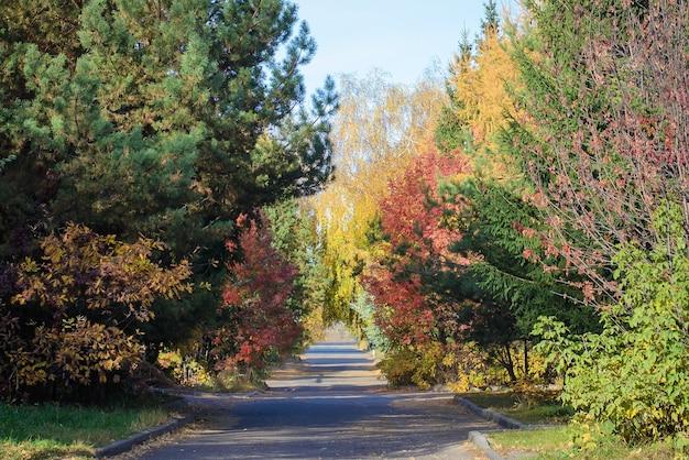 Jasny jesienny krajobraz z drogą i kolorowymi drzewami w słoneczne dni