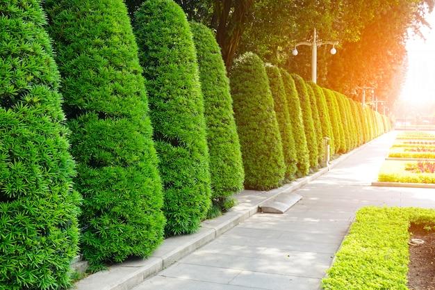 Jasny krajobraz wiosna zbliżenie charakter drzewa