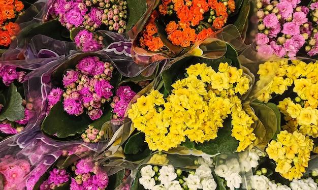 Jasny obraz pełen kolorowych kwiatów w bukietach