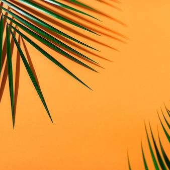 Jasny pomarańczowy lato tło widok z góry z zielonymi świeżymi liśćmi palmy roebelenii i cień. lato tło z promieni słonecznych z miejsca kopiowania.