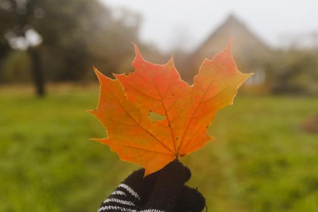 Jasny pomarańczowy liść klonu w dłoni w jesiennym nastroju w rękawiczce