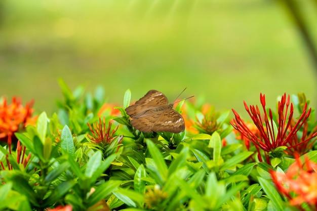 Jasny, soczysty obraz. tropikalny motyl zbiera nektar z kwiatów w ogrodzie. fascynująco powolna klapa skrzydła
