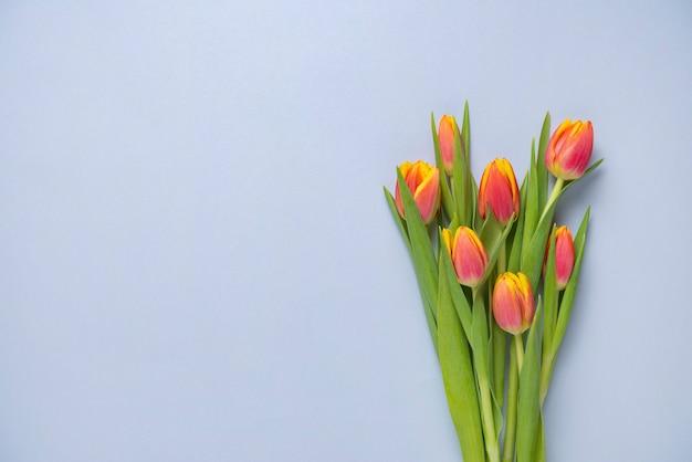 Jasny świeży bukiet żółtych i różowych tulipanów na niebieskim tle