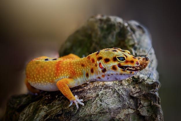 Jaszczurka gekon na gałązkach w ogrodzie