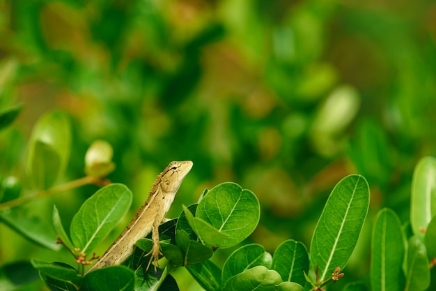 Jaszczurka lub kameleon na czubku drzew