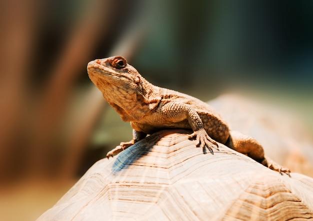 Jaszczurka na kamieniu