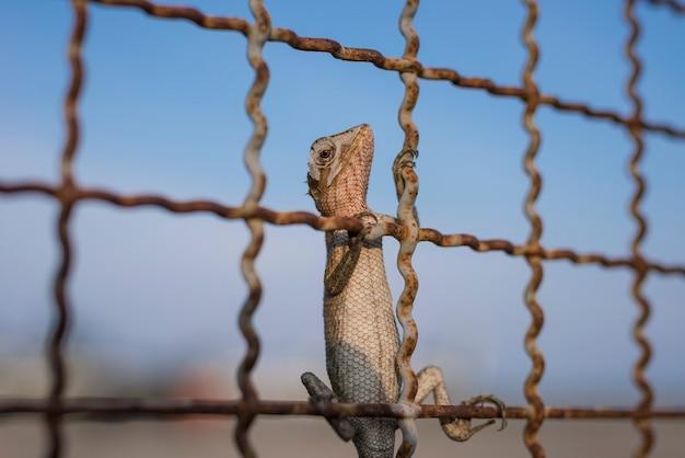 Jaszczurka na ogrodzeniu z światłem słonecznym