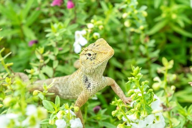 Jaszczurka na roślinach kwiatowych.