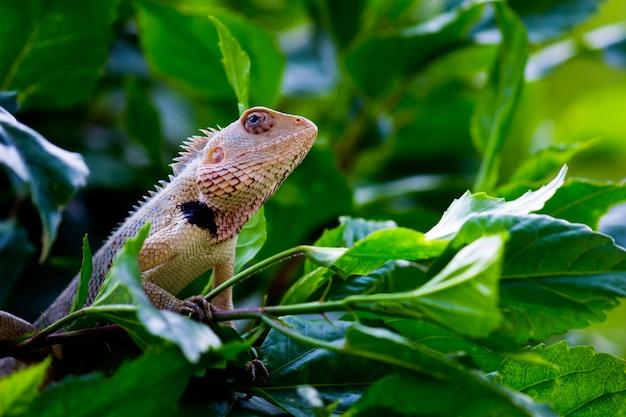 Jaszczurka ogrodowa odpoczywająca na roślinach w swoim naturalnym środowisku